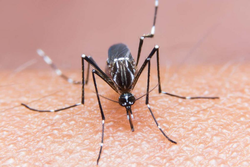 mosquito treatment in the st. louis area